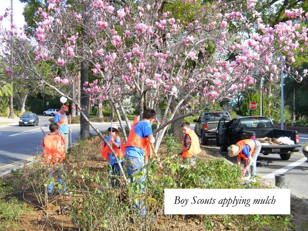 Boy Scouts applying mulch